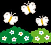 flower_butterfly